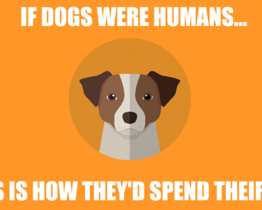 dogs-as-humans