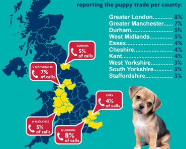 Astonishing 122% Increase in Puppy Farm Complaints