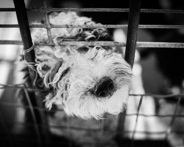dog-black-and-white-cage