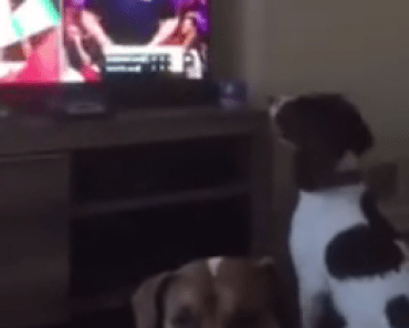 dog-watches-tv