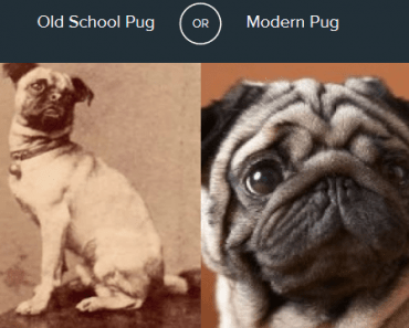 which-pug