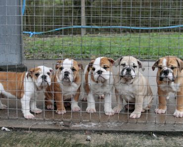 Is The British Government Doing Enough To Tackle Puppy Smuggling? This Charity Says No!